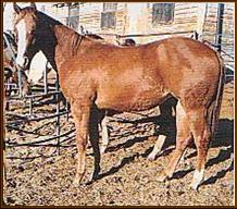 """WHAT'S WRONG WITH THE """"APPALOOSA"""" HORSE INDUSTRY IN CANADA"""